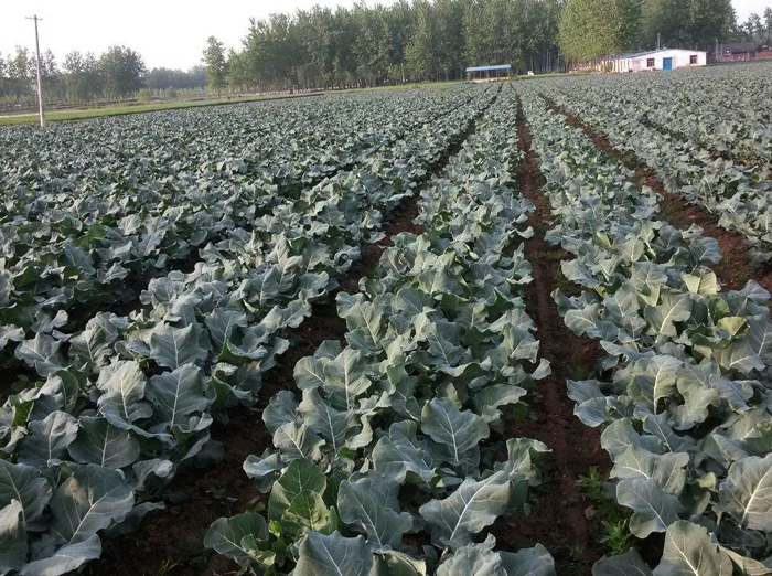 现代农业科技有限公司