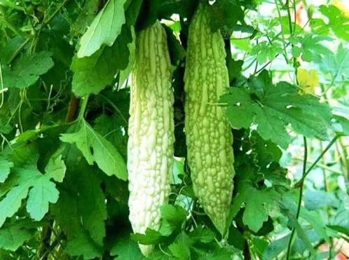 贵州高科技农业种植技术